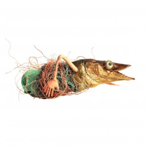 FISH MAIOR